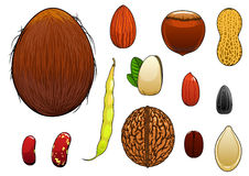 Realistic nuts, seeds and beans in cartoon style Stock Photos