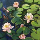 Water lilies bloomed in lake royalty free stock photography