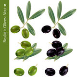 Realistic olives. This graphic is realistic olives. Illustration Royalty Free Stock Photography