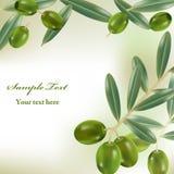 Realistic olives background. Illustration Royalty Free Stock Photo