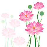 Realistic Oriental lotus. Royalty Free Stock Image