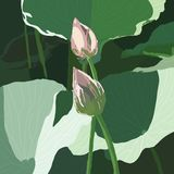 Realistic Oriental lotus - a flower Stock Photo