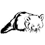 Realistic outline red panda vector illustration. Stock Photography