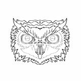 Realistic owl head drawing. And white background Royalty Free Stock Photography