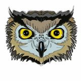 Realistic owl head. And white background Stock Image