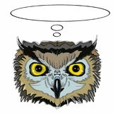 Realistic owl head and thinking and sunglasses. Realistic owl head and thinking and white background Stock Image