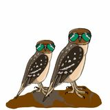Realistic owls and sunglasses drawing. Realistic owls and sunglasses and white background Royalty Free Stock Photo