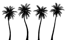Free Realistic Palm Tree Silhouettes, Trunk And Leaves Are Isolated From Each Other Royalty Free Stock Images - 191309309