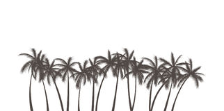 Realistic Palms Silhouette Stock Image