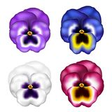 Realistic pansy flower set with different colors, for spring. Realistic pansy flower set with different colors. Vector illustration isolated on white, for spring Stock Image