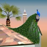Realistic peacock on a tiled roof on the background of a sunset Royalty Free Stock Photo