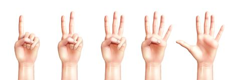 Realistic Hands Counting From One To Five vector illustration