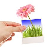 Realistic photo. Hand holding photo of a flower Stock Image