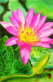 Realistic pink color of lotus flower and green leaves in pond background. Stock Image