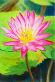 Realistic pink colorr of lotus flower and green leaves Stock Image