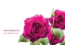 Realistic pink roses bouquet Beautiful Flowers Postcard for Happy Valentines Day, Birthday, Anniversary.  on Royalty Free Stock Photo