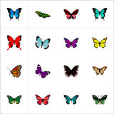 Realistic Pipevine, Sangaris, Milkweed And Other Vector Elements. Set Of Moth Realistic Symbols Also Includes Malachite vector illustration