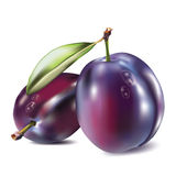 Realistic plum Stock Images