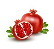 Realistic Pomegranate or garnet on the white background. Vector illustration. EPS10 Royalty Free Stock Photography