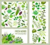 Realistic popular culinary herbs. Labels set. Shop sign. Stripes and cards. Food design for menu, health care, spa, logo, banner, tag, sticker, poster, package Royalty Free Stock Images