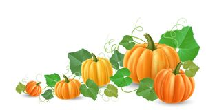 Realistic pumpkin corner decoration for autumn. And harvest season, with different shaped pumpkins, green leaves and tendril. Vector illustration, isolated on Stock Photos