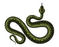 Realistic python vector illustration stock illustration