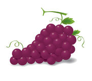 Realistic red grapes. With shadow, illustration Stock Photo