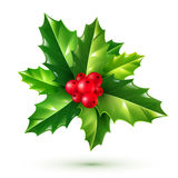 Realistic red holly berries and green leaves. Vector Christmas ornament isolated on white background. Stock Photos