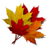 Realistic red maple leaf Royalty Free Stock Photo