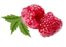 Realistic red raspberries Royalty Free Stock Photo