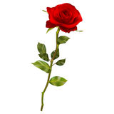Realistic red rose. EPS 10 Stock Photo