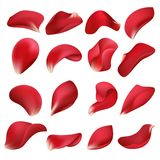 Realistic red rose flower petals isolated on white background vector set. Petal rose natural, flower floral illustration Royalty Free Stock Image