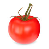 Realistic red Tomato. Royalty Free Stock Image
