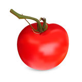 Realistic red Tomato. Royalty Free Stock Images
