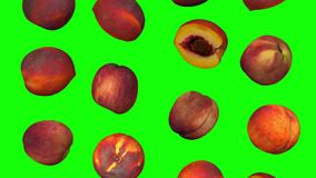 Falling Peaches on Green Background Looping 01A