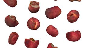 Falling Saturn Peaches on White Background Looping 01A