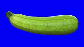 Realistic render of a rotating zucchini on transparent background with alpha channel . The video is seamlessly looping