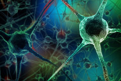 Realistic rendering of neurone - on the green background.  Stock Photos