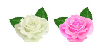 Realistic rose on a white background. Vector Royalty Free Stock Photo