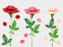 Realistic Roses Set Stock Photo