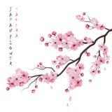 Realistic Sakura Branch. Realistic sakura japan cherry branch with blooming flowers vector illustration Royalty Free Stock Photos