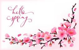 Realistic sakura japan cherry branch stock illustration