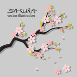Realistic sakura japan cherry branch with blooming flowers Royalty Free Stock Photography