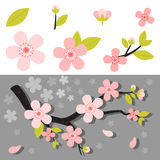 Realistic sakura japan cherry branch with blooming flowers Stock Photo