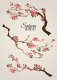 Realistic sakura japan cherry branch with blooming flowers vector illustration Royalty Free Stock Photos