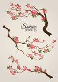 Realistic sakura japan cherry branch with blooming flowers vector illustration vector illustration