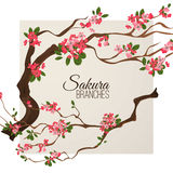 Realistic sakura japan cherry branch with blooming flowers vector illustration Stock Photography