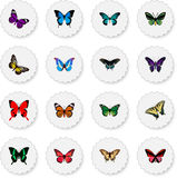 Realistic Sangaris, Birdwing, Morpho Hecuba And Other Vector Elements. Set Of Moth Realistic Symbols Also Includes Julia vector illustration