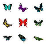 Realistic Sangaris, Tropical Moth, Morpho Hecuba And Other Vector Elements. Set Of Moth Realistic Symbols Also Includes vector illustration