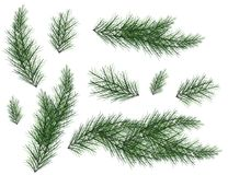 Realistic Set of Green Fir Branches. Christmas tree branches Isolated on white Background for Greeting Card, Flyers, Banners. Vector Illustration Royalty Free Stock Photography